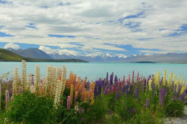 озеро текапо новая зеландия 2 (640x427, 237Kb)