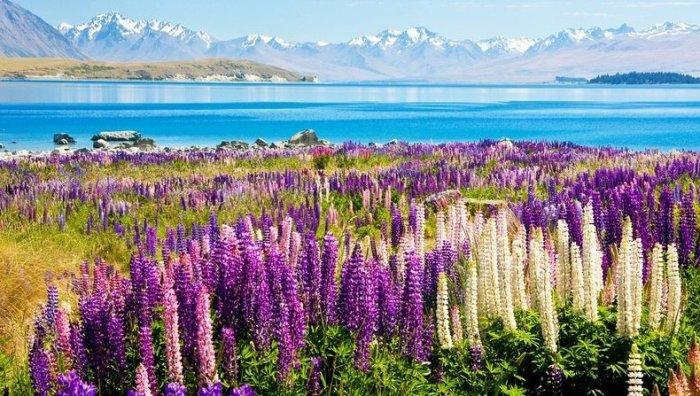 озеро текапо новая зеландия 6 (700x396, 107Kb)