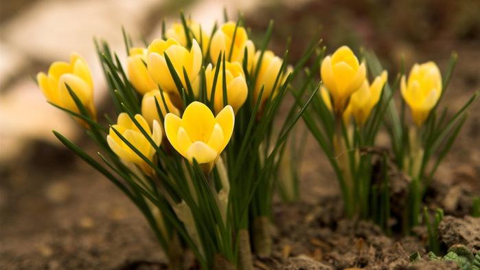 Картинки с большим разрешением цветы 2