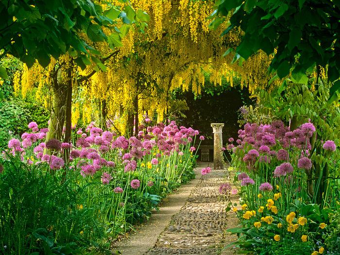Для рабочего стола акация цветы сад
