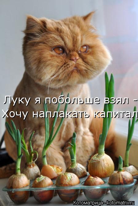 kotomatritsa_4 (449x669, 47Kb)