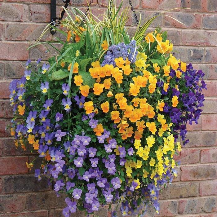 красивые цветы фото (700x700, 256Kb)