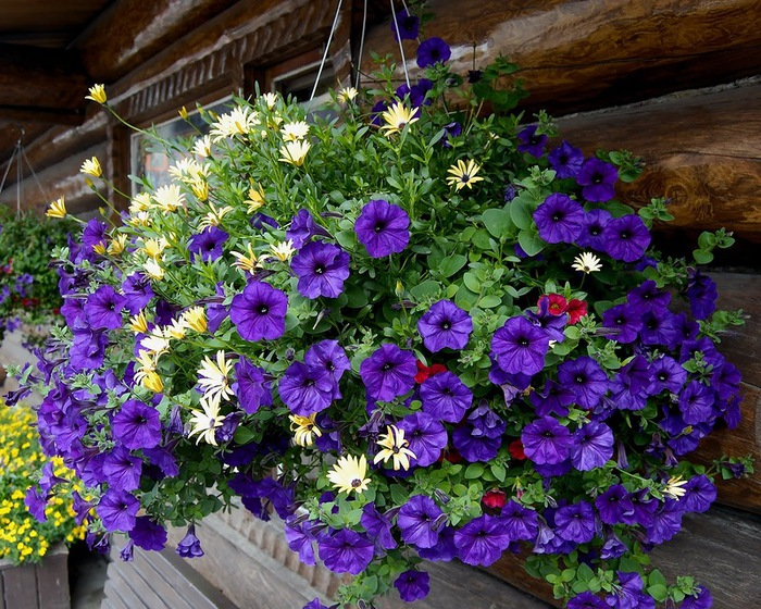 красивые цветы фото 1 (700x560, 205Kb)