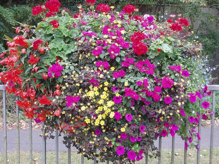 красивые цветы фото 6 (700x525, 279Kb)