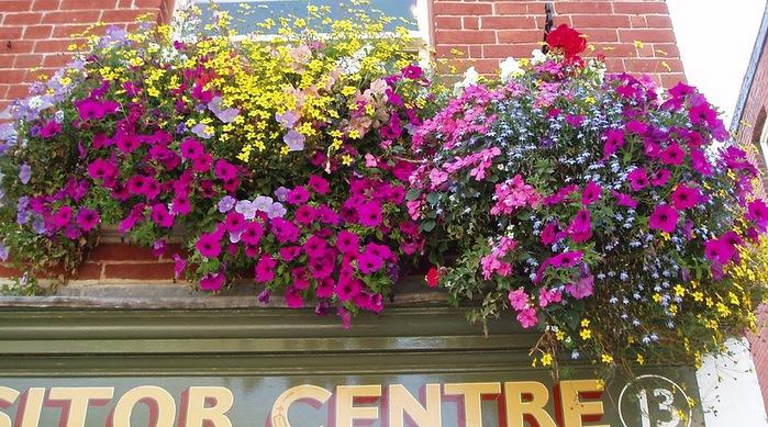 красивые цветы фото 7 (700x389, 160Kb)