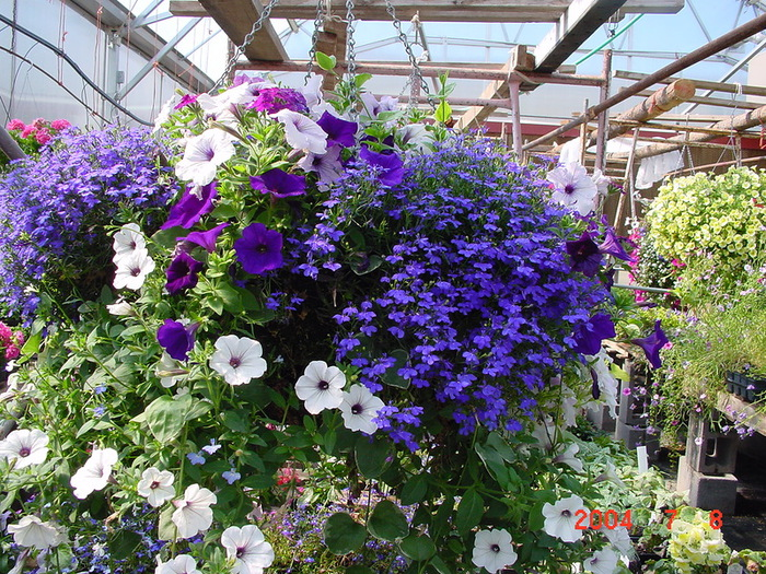 красивые цветы фото 8 (700x525, 257Kb)