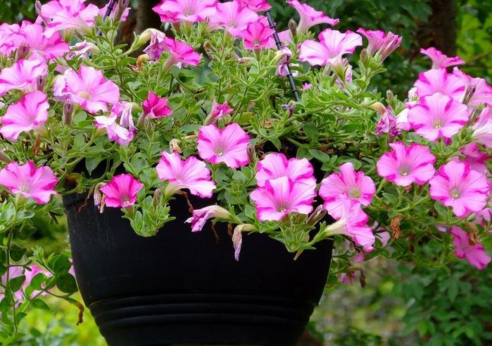 красивые цветы фото 12 (700x491, 157Kb)