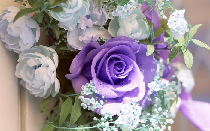 Цветы комнатные фото красивое фото