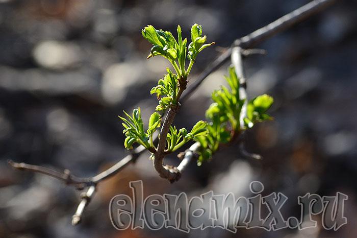 первая зелень/4348076_3vesna (700x466, 59Kb)