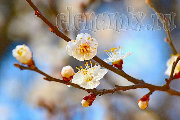 первые весенние цветы/4348076_8vesna1 (700x466, 69Kb)