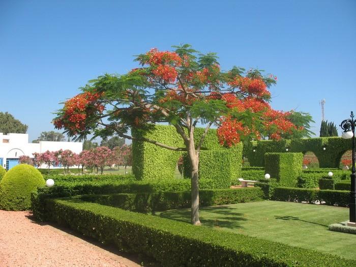 Бахайские сады Акко 19 (700x525, 123Kb)
