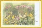 Превью Impressions of Nature 2004-37 (700x460, 257Kb)