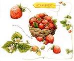 Превью Natures Sketchbook 11 (700x578, 88Kb)