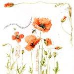Превью Natures Sketchbook 20 (696x700, 79Kb)