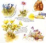 Превью Natures Sketchbook 22 (700x664, 112Kb)