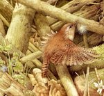 Превью Natures Sketchbook 33 (700x644, 173Kb)