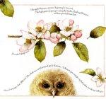 Превью Natures Sketchbook 37 (700x654, 89Kb)
