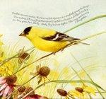 Превью Natures Sketchbook 42 (700x657, 117Kb)