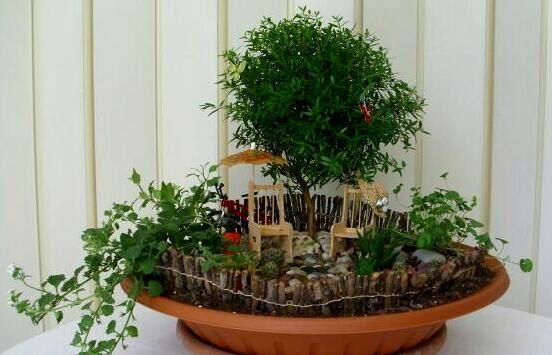 Композиции комнатных растений своими руками