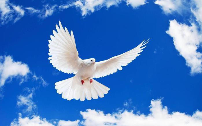 Animals_Birds_White_dove_in_the_sky_035948_ (700x437, 32Kb)