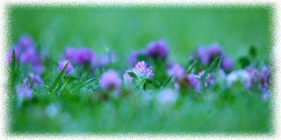 3815384_Flower_1920x1080_31__kopiya_2 (400x200, 14Kb)