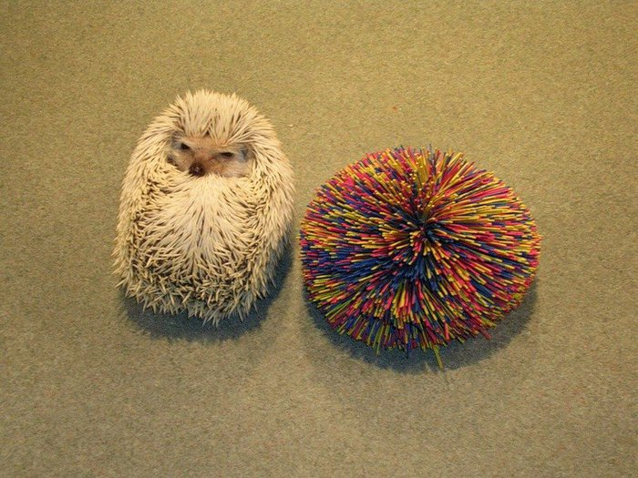 Hedgehogs02 (700x525, 108Kb)