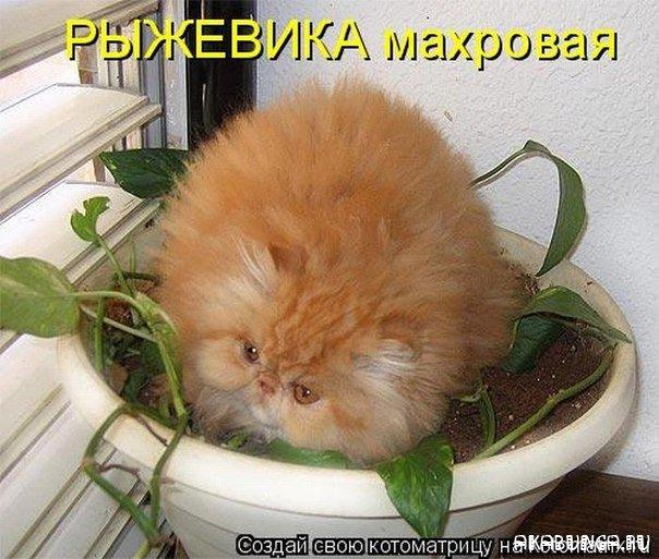1343715551_kotomatrica_40 (604x513, 78Kb)