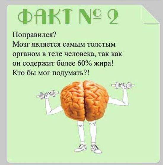 brain_15 (550x556, 35Kb)