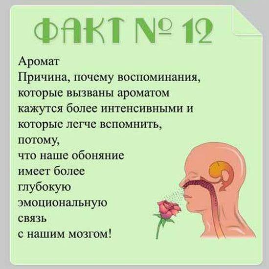 brain_05 (550x550, 42Kb)