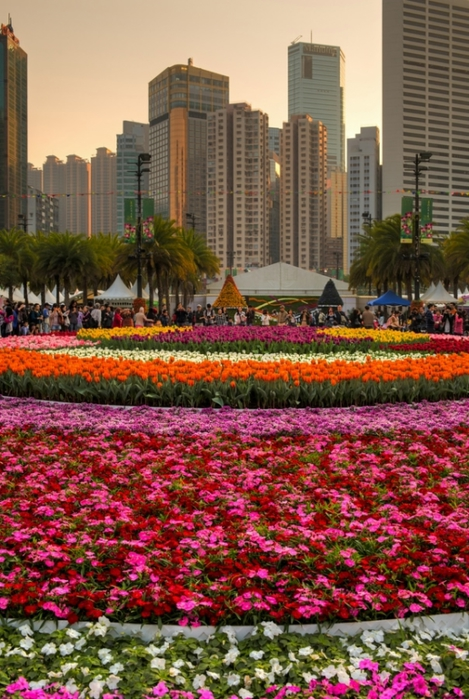 фестиваль цветов в гонгконге 2013 (469x700, 310Kb)