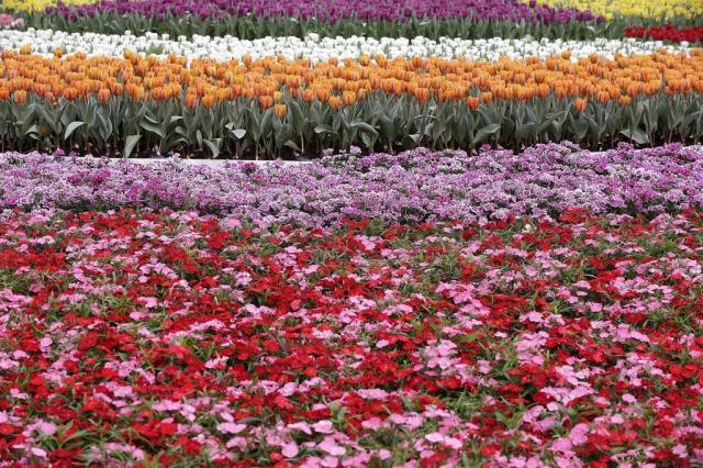 фестиваль цветов в гонгконге 2013 8 (640x426, 384Kb)