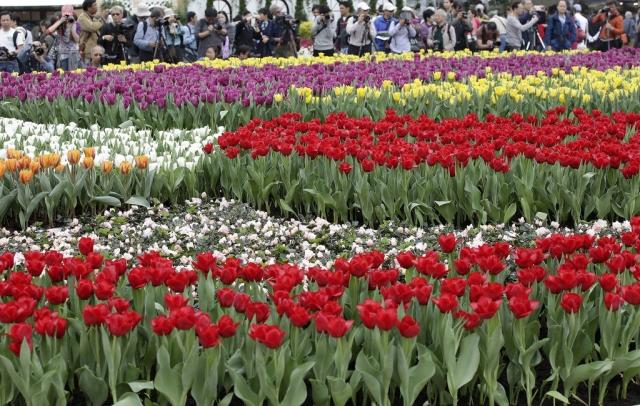 фестиваль цветов в гонгконге 2013 14 (640x406, 319Kb)