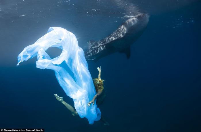 китовая акула фото 1 (700x459, 54Kb)