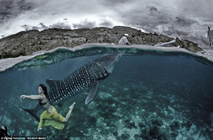 китовая акула фото 3 (700x458, 104Kb)