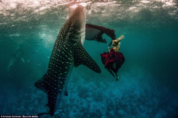 китовая акула фото 5 (700x465, 109Kb)