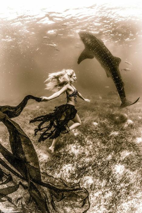 китовая акула фото 7 (468x700, 392Kb)