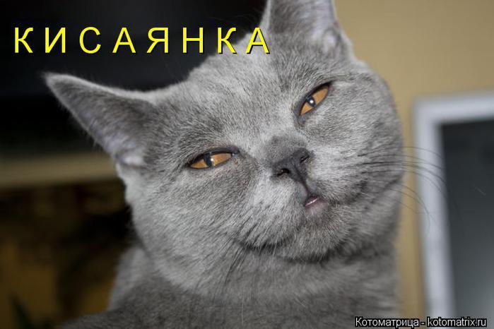 kotomatritsa_Uj (700x466, 40Kb)