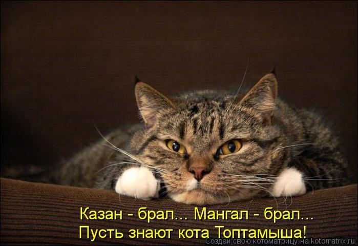 kotomatritsa_Rx (700x480, 46Kb)
