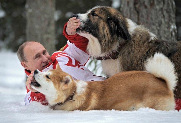 Владимир Путин 24 марта Подмосковье с болгарской овчаркой Баффи и Юмэ — японской породы акито-ину (700x473, 65Kb)