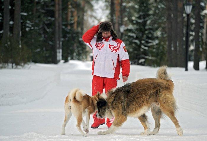 Владимир Путин 24 марта Подмосковье с собаками болгарской овчаркой Баффи и Юмэ японской породы акито-ину (700x475, 56Kb)