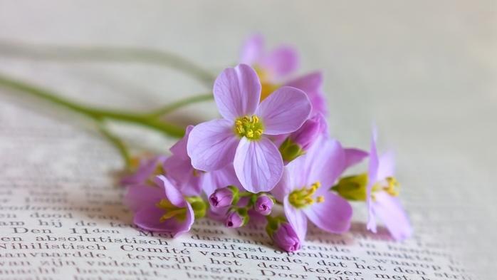 Мелкие цветы картинки 8