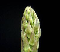 200px-Asparagus_officinalis_ies (200x175, 4Kb)