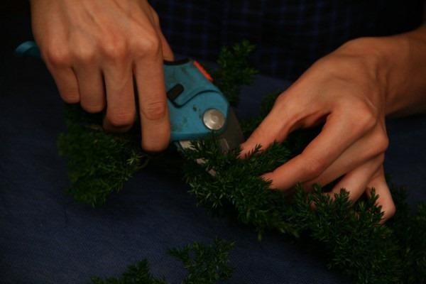 Как сделать своими руками бонсай