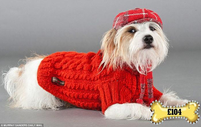одежда для собак фото 3 (700x440, 82Kb)