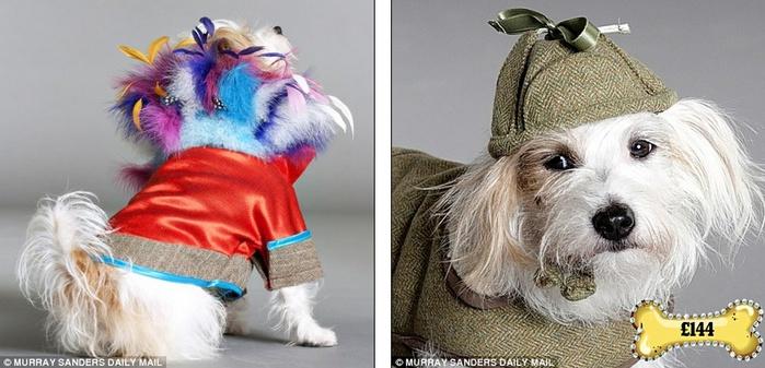 одежда для собак фото 5 (700x337, 105Kb)