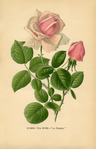Превью Vintage-Printable-Tea-Rose-GraphicsFairysm (449x700, 322Kb)