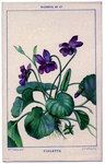 Превью Violets-GraphicsFairy (448x700, 438Kb)