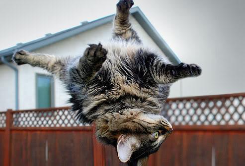 cat-falling (493x335, 33Kb)