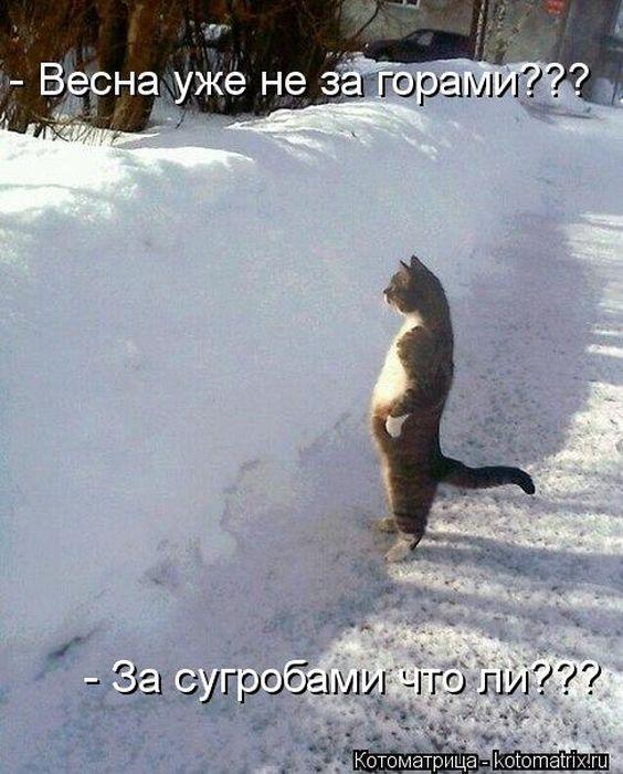 kotomatrix_03 (564x700, 71Kb)