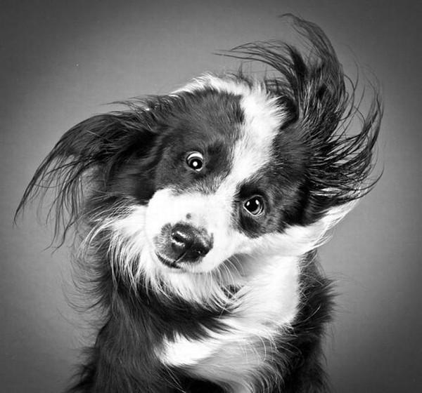 Морда собаки (300x260, 74Kb)